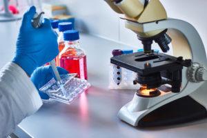 Labor Studien Chaga Pilz